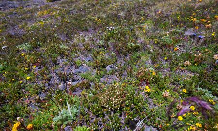 Rocky landscape with mosses and flowers in the Andes Mountains in Argentina Stock Photo