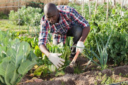 Młody afrykański mężczyzna ogrodnik ogrodniczy na zewnątrz w wiosennej przyrodzie