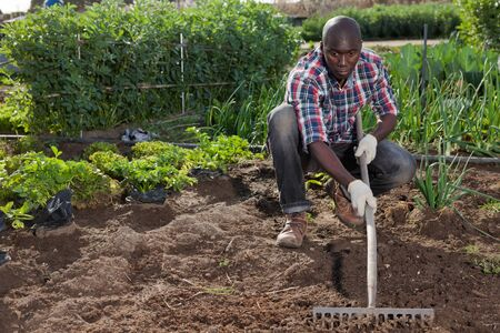 Young African-American man hoeing ground in domestic garden Banco de Imagens