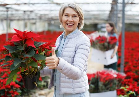 Attractive mature woman holding red Christmas star Poinsettia, looking satisfied with her greenhouse purchase