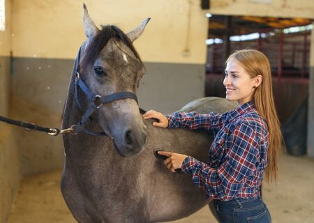 Young attractive woman shearing gray horse with trimmer in stable