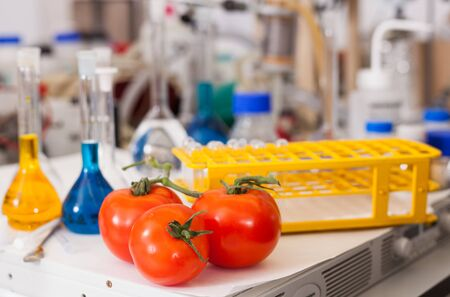 Fresh tomatoes on table on background of laboratory equipment and colored chemical reagents. Concept of research of genetic modification of food