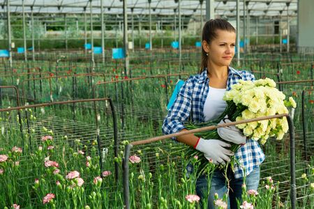 Portrait of young woman with  fresh cut carnation flowers  tea color in greenhouse Stok Fotoğraf