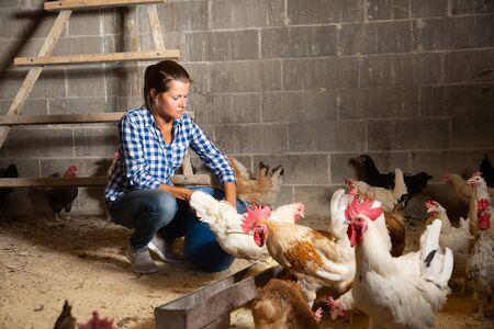 Gerichte jonge vrouw die kippen voedt terwijl ze in het kippenhok werkt Stockfoto