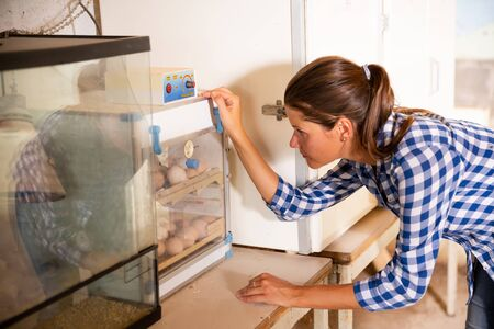 Woman monitors maturation of eggs in an incubator. Growing chickens in an incubator.