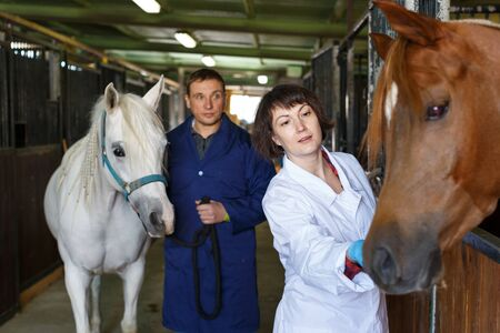 Male worker and female veterinarian examining horse at stable