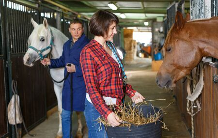Positive female worker feeding horses with hay at stable