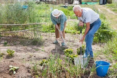 Senior grandparents harvest on the field