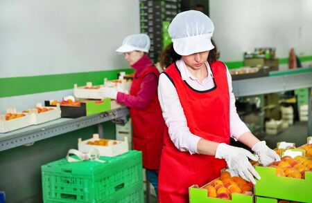 Positive woman working on sorting line in the fruit warehouse, stacking boxes with selected apricots