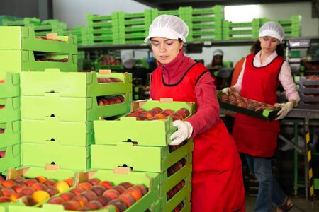Portrait of two women in uniform calibrating and packaging harvested peaches at warehouse Standard-Bild