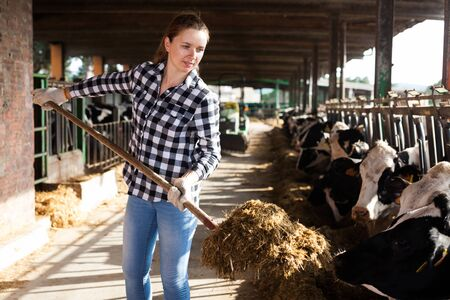 Young positive woman taking care of cows on cowshed