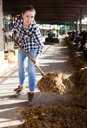 Young woman working with hay for cows on dairy farm 版權商用圖片