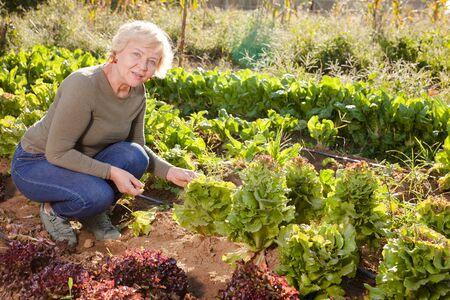 Positive senior woman demonstrating different varieties of lettuce on garden beds