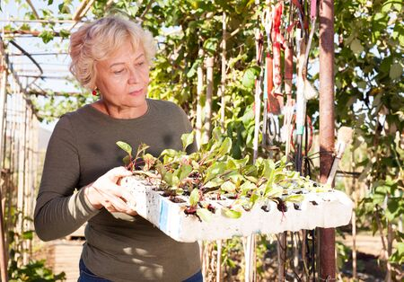 Smiling senior woman holding box of seedlings of greens in garden on sunny day Stock Photo