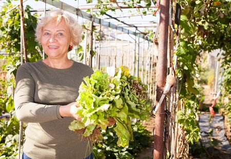 Positive senior woman demonstrating different varieties of lettuce in garden Stock Photo