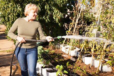 Senior woman watering beds of plants with rubber hose in garden Stock Photo