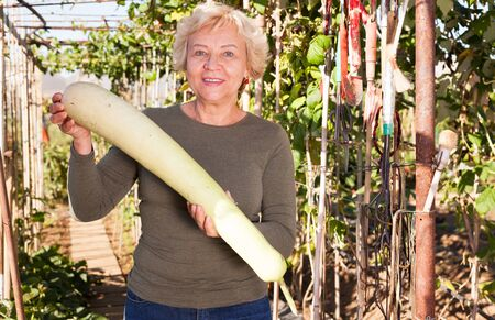 Positive senior woman demonstrating lagenaria or long zucchini on plantation beds