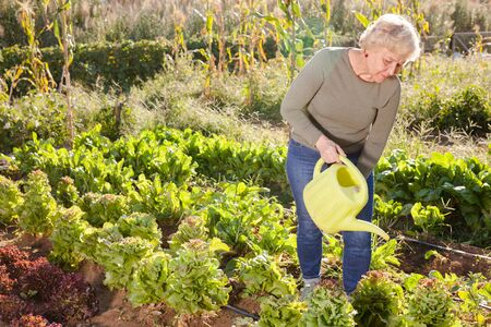 Cheerful senior woman watering plants with watering can in garden Stock Photo