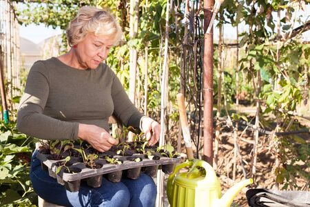 Portrait of cheerful senior woman taking care of seedlings in garden Stock Photo