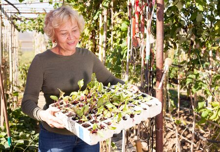 Portrait of cheerful senior woman holding box of seedlings in garden Stock Photo