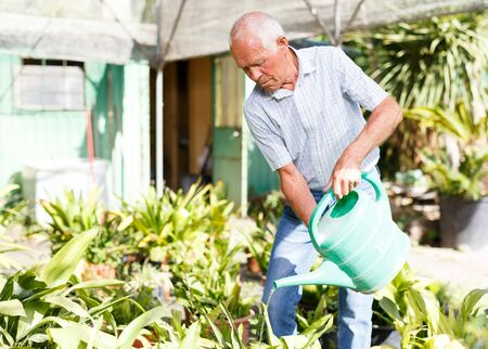 Elderly amateur gardener watering plants with watering pot while gardening in smallholding