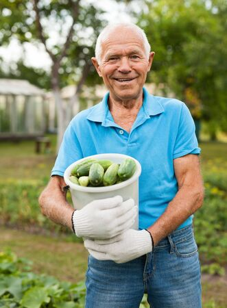 Happy elderly man farmer with bucket of cucumbers in the garden