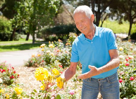 Cheerful mature man gardener posing at flower bed with blooming roses on sunny day Stock Photo