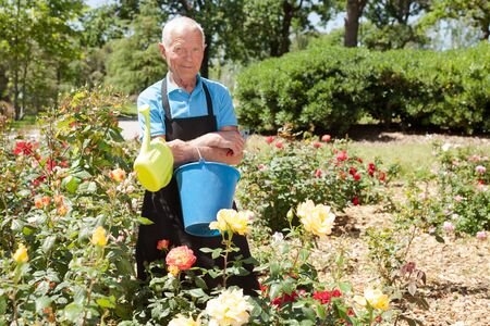 Portrait of senior man holding bucket and watering can at roses flowerbed in park
