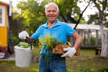 Happy gray-haired man with harvest of vegetables on his farm