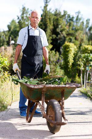 Elderly gardener pushing wheelbarrow with grass and cut branches in his homestead garden Archivio Fotografico - 133854430