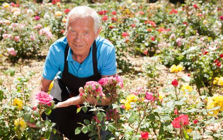 Cheerful mature man gardener posing at flower bed with blooming roses on sunny day Archivio Fotografico - 133854468