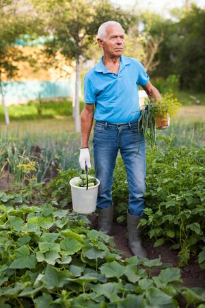 Elderly man farmer with basket and bucket of vegetables in the garden Stockfoto