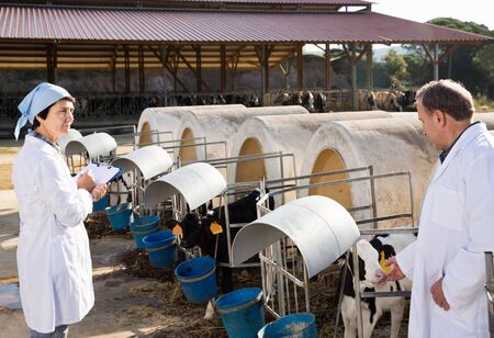 positive american man and woman veterinarians working in cowshed on dairy farm