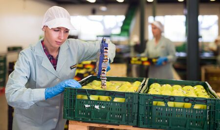 Young girl in uniform marking labels on apples in crates at apples factory