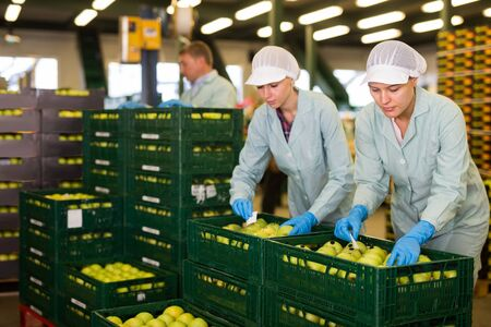 Young focused women in uniform sticking labels on fresh apples at factory