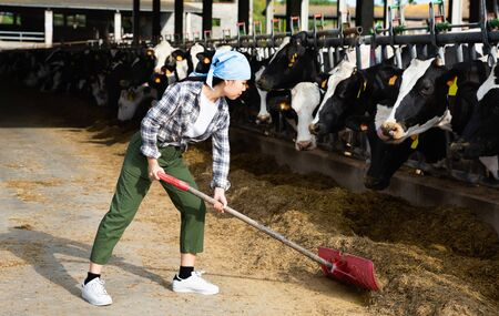Young happy cheerful positive smiling Chinese woman working on dairy farm, feeding cows with hay in stall outdoor
