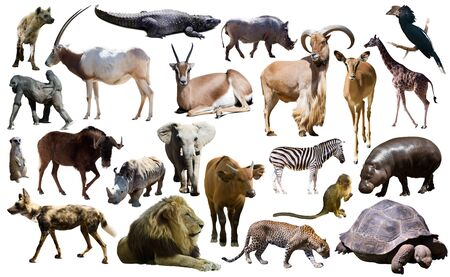 Set of different African animals isolated over white Stock Photo