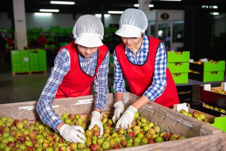 Cheerful positive smiling woman worker sorting and preparing pears for packaging and storing