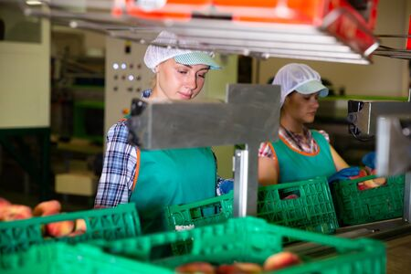 Young women sorting peaches to crates and checking quality at warehouse on factory Imagens