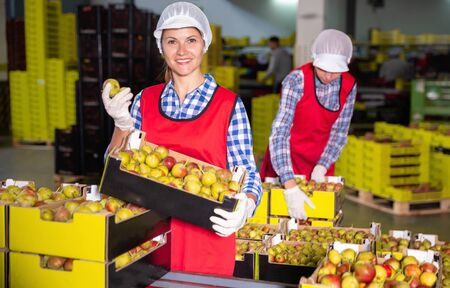 Young  positive smiling women in uniform during packaging pears to crates at warehouse, checking quality of fruits Imagens