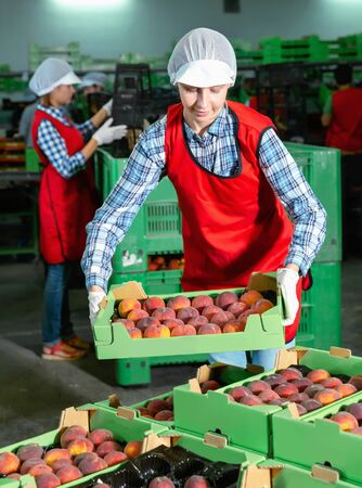 Diligent efficient  friendly  young woman worker sorting and preparing nectarines for packaging at factory Imagens