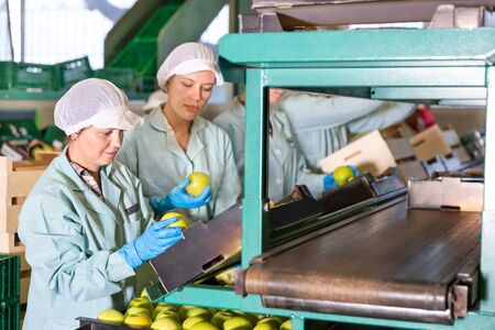 Women working on a producing sorting line at fruit warehouse, preparing an apples for packaging Stock fotó