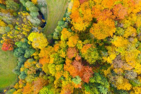View from the heights of the colorful autumn forest Zdjęcie Seryjne