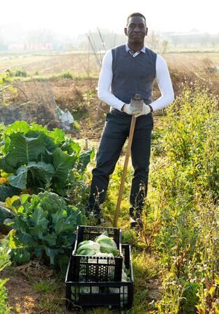 Portrait of African American male amateur gardener standing with hoe on his vegetable garden next to growing cauliflowers  Archivio Fotografico