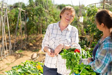 Portrait of smiling mature woman gardener standing in garden with gathered vegetables and talking with young female neighbor