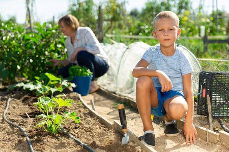 Portrait of preschool boy working in vegetable garden in summer, woman on background Stock fotó