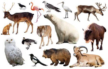 Satz von verschiedenen europäischen isoliert auf weißen Wildtieren einschließlich Vögeln und Säugetieren