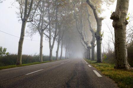 Mystical landscape - asphalt road in fog among trees