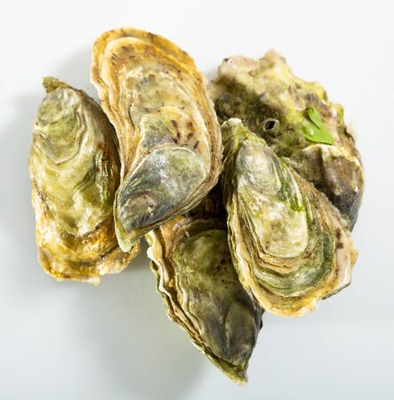 Image of tasty raw closed oysters on white background, close-up