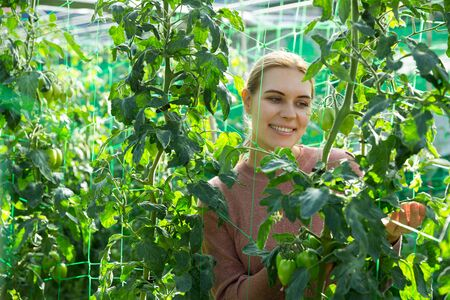 Woman controlling quality of ripening tomatoes in her organic plantation Stock Photo